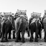 elephants-back-indien